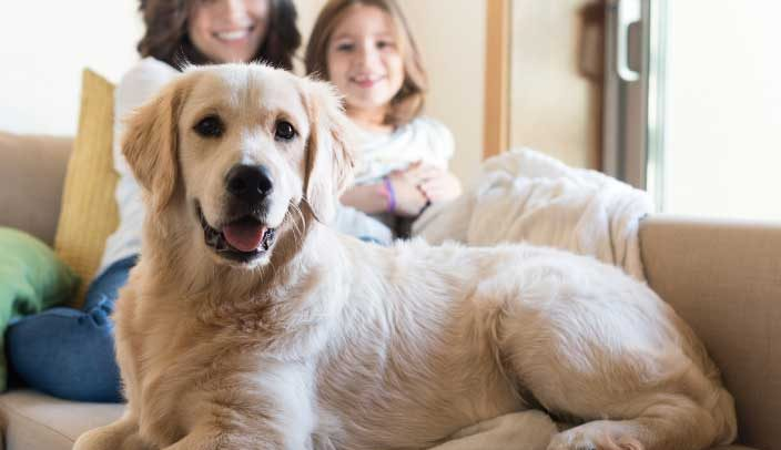 New York Homeowners Insurance for Dog Owners: Liability and Pets